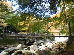 箱根 早川渓谷(堂ヶ島渓谷) 早川にかかる吊り橋