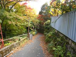 「堂ヶ島渓谷入り口」を少し進んだあたり