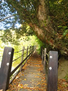 その先にある木の橋