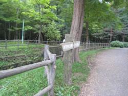 北海道札幌市 円山公園駅から八十八か所入口の間の歩道
