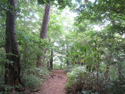 円山ハイキング道