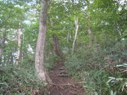 円山山頂から、円山動物園へ続く道