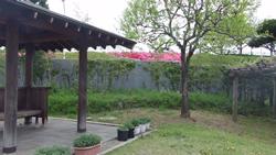 山本亭 お庭