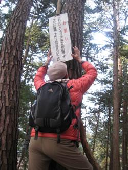 昇仙峡ハイキングコース 弥三郎岳遊歩道 見晴台