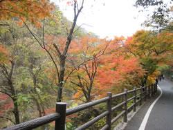 昇仙峡の遊歩道