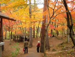 昇仙峡の紅葉スポットの公園