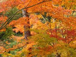 昇仙峡の紅葉 「猿岩」手前