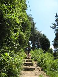 高尾山1号路 金毘羅台手前の階段