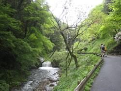 高尾山6号路 入口手前の川沿いの道