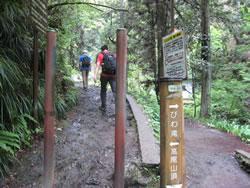 高尾山6号路 びわ滝分岐
